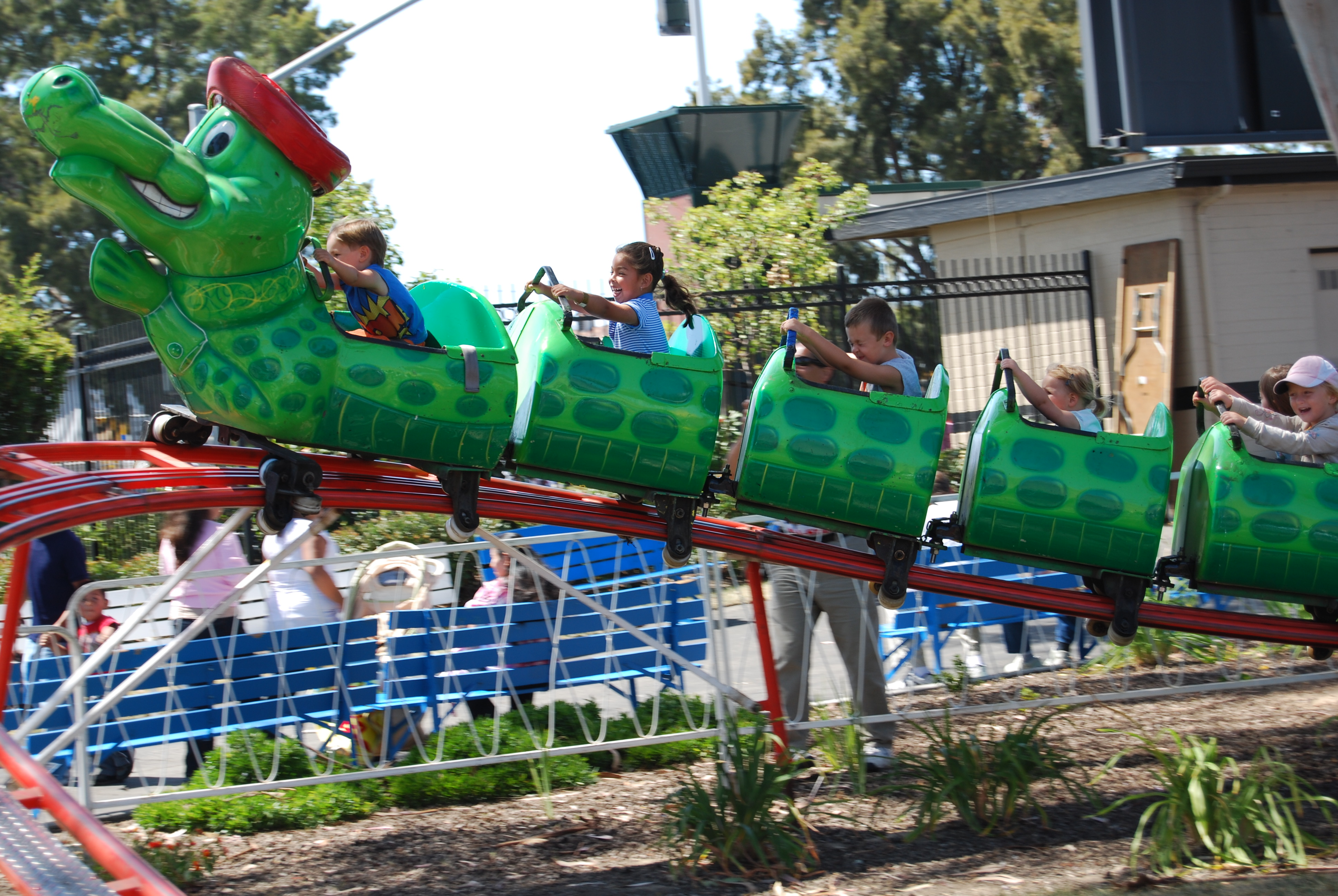 Alligator Coaster