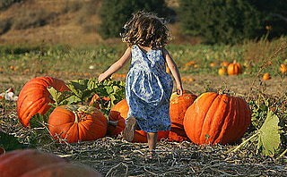 Will You Pick Up Your Pumpkins at a Patch or Supermarket?