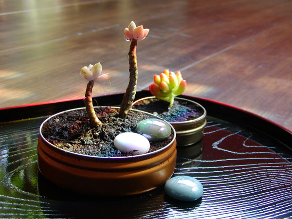 Gomi Style shows you how to whip up an Altoids tin mini garden!
