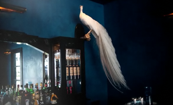 If you're going to use taxidermy in your home, go outside the box. This white peacock is unexpected and exotic, especially next to those dreamy blue walls.