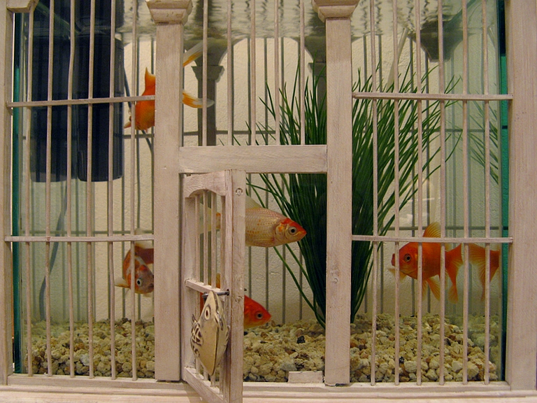 With a fish bowl set inside, this birdcage is a funny aquarium that gives the illusion that the fish can swim out into the room. Source: Flickr User PhOtOnQuAnTiQuE