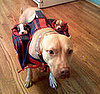 Dog With Pup Transporter