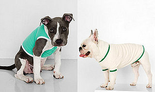 American Apparel Tees for Dogs