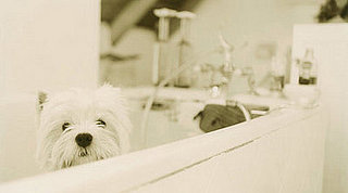 Americans Spending More on Pampering Pets