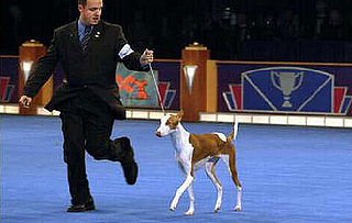 Animal Planet's Dog Championships Tonight at 8pm