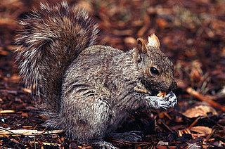 Creature Features: Squirrels