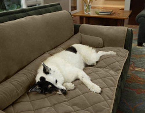 Couch Saver: Spoiled Sweet or Spoiled Rotten?