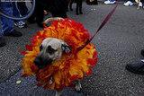 mardi_gras_barkus_parade-052