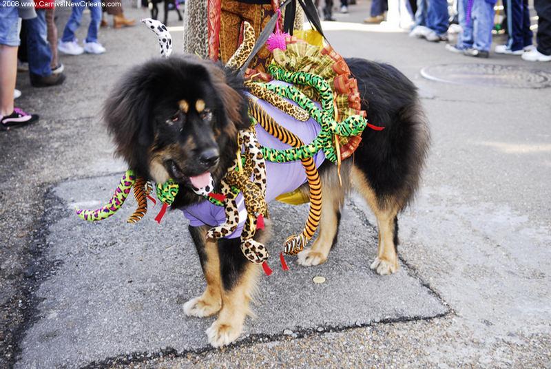 mardi_gras_barkus_parade-058