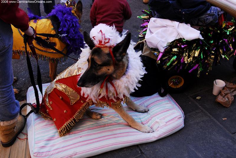mardi_gras_barkus_parade-081