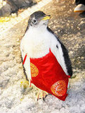 Penguins Celebrate Chinese New Year, Too!