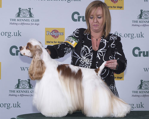 2008 Crufts Dog Show