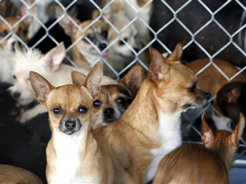 The Scoop: Nearly 800 Dogs Too Many