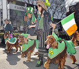 Members of the Irish Setter Club March During the St. Patrick's Day Parade in Tokyo