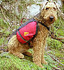 Get in Gear: Kelty Dog Pack for Hiking