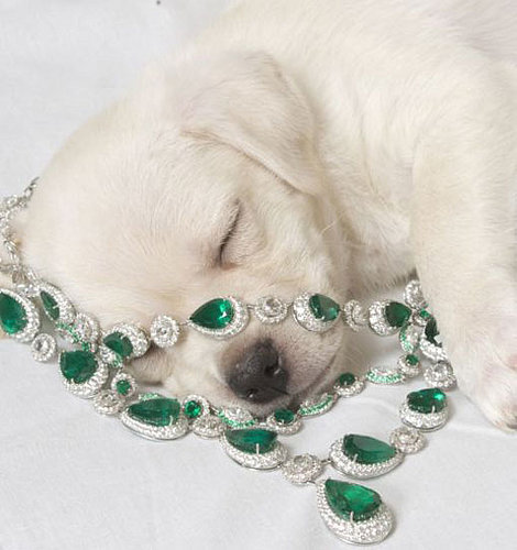 ASPCA and Chopard Team Up With Diamond Paws