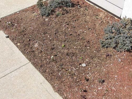 My Garden 4/3/08