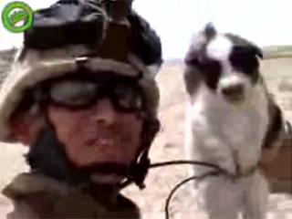 Marines Outraged by Puppy-Throwing Video