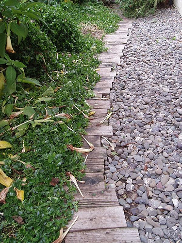 Wooden Path in Yard