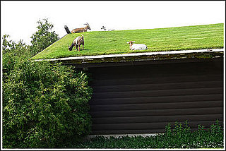 Casa Verde: What Are Green Roofs?