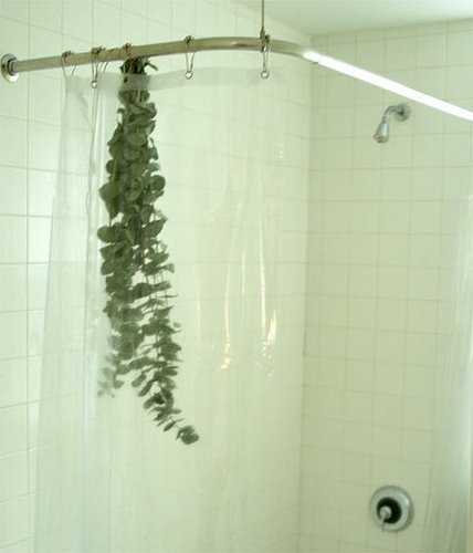 Casa Quickie: Bathroom Eucalyptus