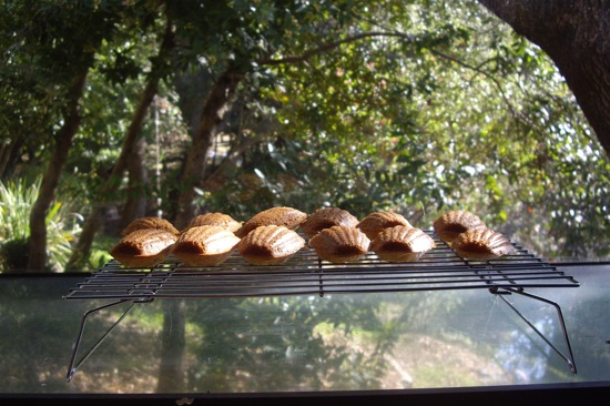 Savory Madelines