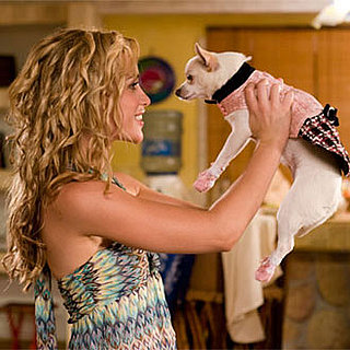 Photo From Beverly Hills Chihuahua, Which Scored Top Spot at the Box Office for Second Weekend in a Row