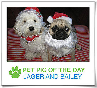 Pet Pic of the Day: Bailey and Jager Are Ready For Xmas