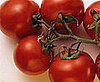 Contaminated Tomatoes: Salmonella Strikes Again