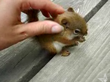 Cute Alert: Baby Squirrel Eating a Nut