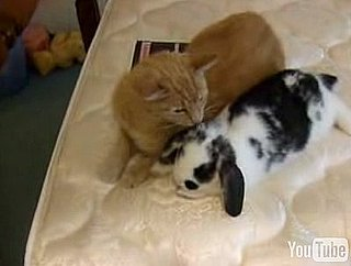 Cat and Rabbit Are Best Friends