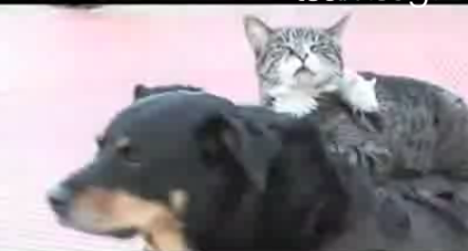 Interspecies Lovin': A Dog, a Cat, and a Rat