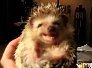 Cute Alert: Baby Hedgehog Eating a Carrot