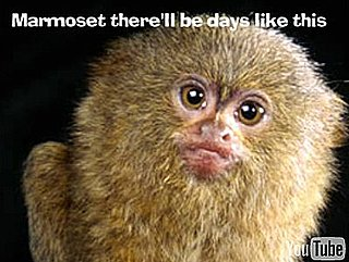 Marmoset There'll Be Days Like This