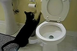 Cat Flushing the Toilet Song