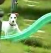 Dog Wants Up Slide