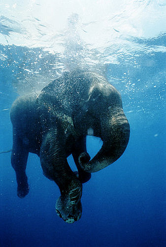 Ancient Elephant Relatives Lived in Water