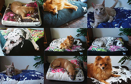 Kept Pets Hand Made Pet Pillows