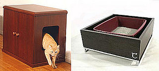 Litter Box Debate: Hidden or Visible?