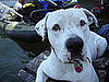 Pet Pics on Petsugar 2008-08-21 08:00:59