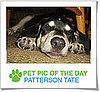 Pet Pics on Petsugar 2008-11-03 07:00:53