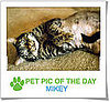 Pet Pics on Petsugar 2008-11-10 09:30:34