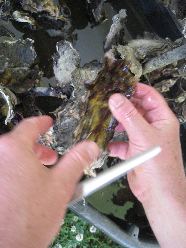 On Saturday I chose an oyster off of the cluster to shuck. The first step is to remove the hairs, grime, and dirt off of the oyster shell.