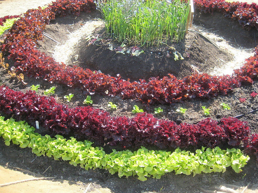 In neat circles, the vegetables look pretty.