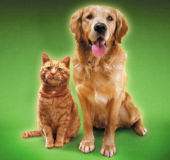Will the Top 10 Dog and Cat Names of 2008 Surprise You?
