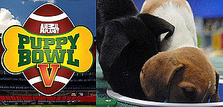 Help PetSugar: What Would You Ask the Puppy Bowl Referee?