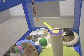 Watch Out Puppy Cam, Meet Kitten Cam!