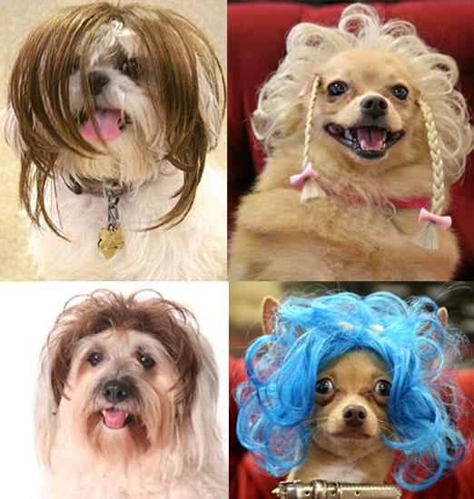 Wiggles Pet Wigs 4