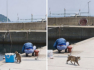 Fresh Fish For Kitty?