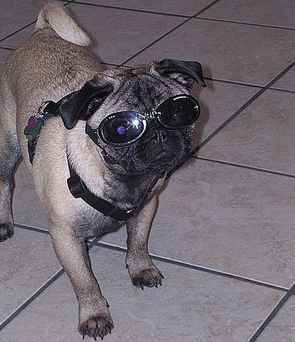 Street Team: Doggles